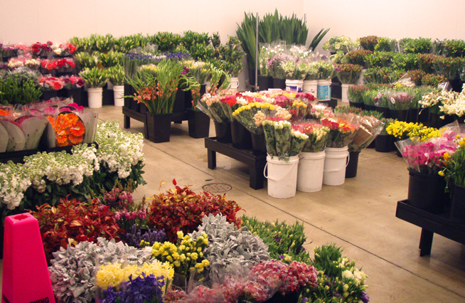 Wholesale flowers in Sri Lanka